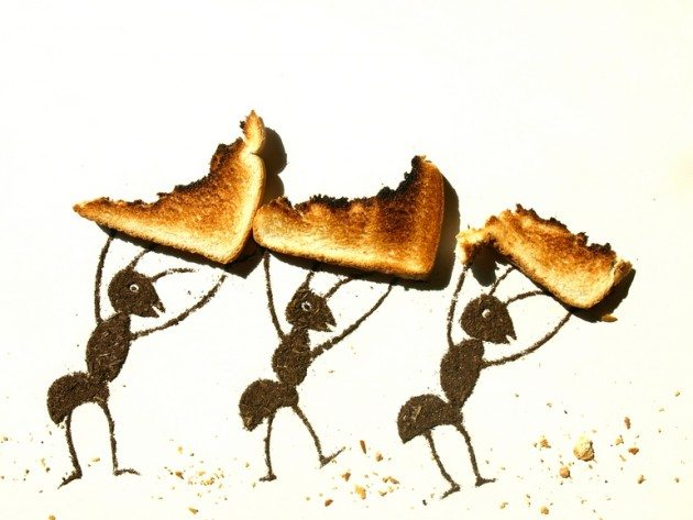 Ants Carrying Left Over Bread_Sarah Rosado