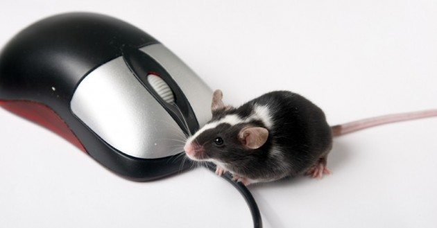 mouse with mouse