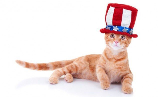 Patriotic cat isolated on white