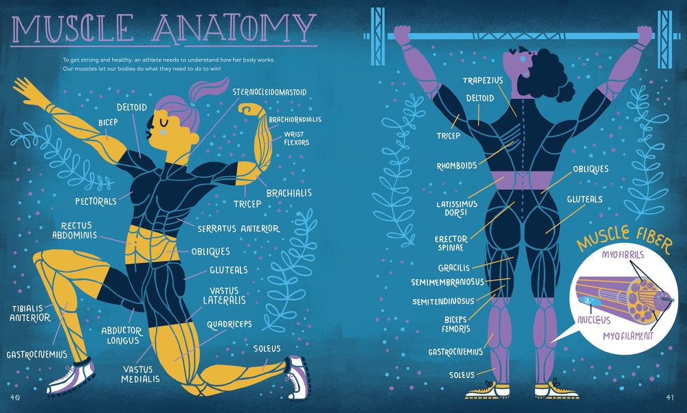 Rachel Ignotofsky Muscle Anatomy